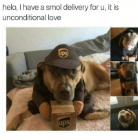 💗💖💗 (@tatum.strangely): helo, I have a smol delivery for u, it is  unconditional love  UPS 💗💖💗 (@tatum.strangely)