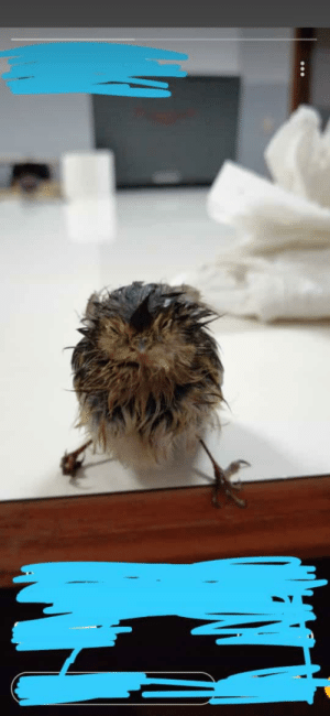 Help a fellow bird! Does anyone know what kind of bird he is/what he eats or we can feed him? Regardless, say hi to our soaked friend, Ino!: Help a fellow bird! Does anyone know what kind of bird he is/what he eats or we can feed him? Regardless, say hi to our soaked friend, Ino!