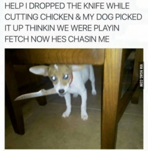 Chicken, Help, and Dog: HELP I DROPPED THE KNIFE WHILE  CUTTING CHICKEN & MY DOG PICKED  IT UP THINKIN WE WERE PLAYIN  FETCH NOW HES CHASIN ME HELP GUYS!
