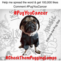 Birthday, Memes, and Cancer: Help me spread the word & get 100,000 likes  Comment #Pug YouCancer  CAPugYouCancer  Check Them PuggingLumps *HELP US TO SPREAD THE WORD* Hi friends, I started my cancer treatment today & it got me thinking. We thought how many people with dogs & cats, never bother to check them for lumps, or if they see a lump, never bother to get them checked out. If Mum & Dad hadn't been so keen to check my lump out & left it, it could have been to late to treat. So please help us to spread the word by sharing this message & making the comment #PugYouCancer or #CheckThemPuggingLumps  let's see if we can get 100,000 likes & comments by my birthday in January. If we can save just 1 dog or cat, it will have all been worth it. Love you friends...❤️️❤️️❤️️ #PugYouCancer