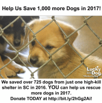 Lucky Dog needs your help to save 1,000 more dogs in 2017! In 2016 we rescued more than 725 dogs and cats from the Florence, South Carolina County Shelter. Without your support 9 out of every 10 of these animals would have been euthanized. Our Lucky Dogs need YOU! We need your support to save 1,000 animals like the puppies pictured here! Donate TODAY at the link in our bio and save a life! Your support is literally life-changing and the Lucky Dogs are counting on YOU!: Help Us Save 1,000 more Dogs in 2017!  Lucky  Animal  Rescue  HAmLucky Dog  We saved over 725 dogs from just one high-kill  shelter in SC in 2016. YOU can help us rescue  more dogs in 2017.  Donate TODAY at http://bit.ly/2hGg2Ai! Lucky Dog needs your help to save 1,000 more dogs in 2017! In 2016 we rescued more than 725 dogs and cats from the Florence, South Carolina County Shelter. Without your support 9 out of every 10 of these animals would have been euthanized. Our Lucky Dogs need YOU! We need your support to save 1,000 animals like the puppies pictured here! Donate TODAY at the link in our bio and save a life! Your support is literally life-changing and the Lucky Dogs are counting on YOU!