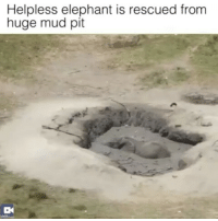 Memes, Elephant, and Link: Helpless elephant is rescued from  huge mud pit Faith in humanity restored- FULL VIDEO AT PMWHIPHOP.COM LINK IN BIO