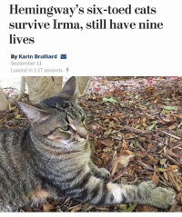 "@tanksgoodnews is restoring my faith in humanity with his ""good news only"" posts: Hemingway's six-toed cats  survive Irma, still have nine  lives  By Karin Brulliard  September 11  Loaded in 1.17 seconds @tanksgoodnews is restoring my faith in humanity with his ""good news only"" posts"