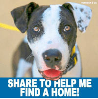 Memes, California, and Email: HENDRICK & CO.  SHARE TO HELP ME  FIND A HOME! The Beautiful Gigi Is Ready For A Forever Home!!  Gigi is a sweet, beautiful, 1 year old girl who is looking for a foster or forever home! Gigi loves kids, is good with most dogs (she loves the boys!), she is good on the leash, knows her basic commands and loves car rides! She is house/crate trained and an easy going girl!  Email dogs@labradorsandfriends.org or fill out their online application at www.labradorsandfriends.org Gigi is located in Southern California...Please Share!!