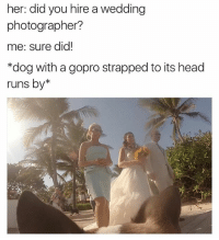 Head, Memes, and GoPro: her: did you hire a wedding  photographer?  me: sure did!  *dog with a gopro strapped to its head  runs by* why are u like this @cesarsway