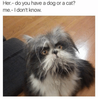 Memes, 🤖, and Dogged: Her do you have a dog or a cat?  me don't know. COMMENT - cat or dog?!?!