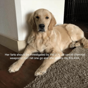 Dog Memes Of The Day 32 Pics – Ep35 #dogs #doglovers #lovelyanimalsworld - Lovely Animals World: Her farts should be investigated by the U.N, as use of chemic  weaponry, but1 let one go and she shoots me this look Dog Memes Of The Day 32 Pics – Ep35 #dogs #doglovers #lovelyanimalsworld - Lovely Animals World