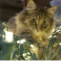Christmas, Time, and Her: Her first time seeing Christmas lights