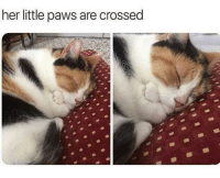 Her, Little, and Paws: her little paws are crossed