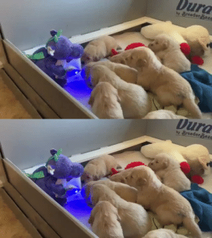 Here's a dinosaur reading bedtime stories to a bunch of puppies. (via): Here's a dinosaur reading bedtime stories to a bunch of puppies. (via)