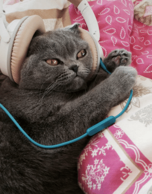 Here's a pic of my cat with headphone to cheer you up during quarantine.: Here's a pic of my cat with headphone to cheer you up during quarantine.