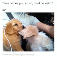 """Being Weird, Crush, and Memes: """"here comes your crush, don't be weird.""""  me:  @bustle  image via infinitesunlight tumblr.com me"""