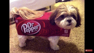 Here is a cute picture of a puppy in a Dr. Pepper box, just for your enjoyment.: Here is a cute picture of a puppy in a Dr. Pepper box, just for your enjoyment.