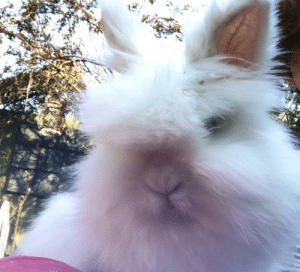 Here is my beautiful rabbit billy 😊: Here is my beautiful rabbit billy 😊