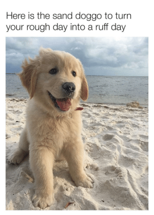 Wholesome doggo pun: Here is the sand doggo to turn  your rough day into a ruff day Wholesome doggo pun