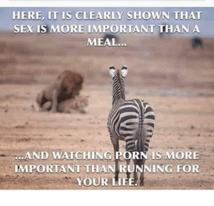 The circle of life: HERE, IT IS CLEARLY SHOWN THAT  SEX IS MORE IMPORTANT THAN A  MEAL...  DAND WATCHING PORN IS MORE  IMPORTANT THAN RUNNING FOR  YOUR LIFE. The circle of life