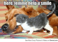 u smile: here,lemme help u smile  See More Crazy Pictures & Videos on Owned.com