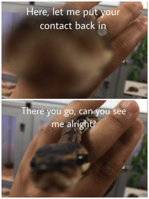 Snake, Alright, and Back: Here, let me put your  contact back in  There you go, can you see  me alright? Snake is helpful