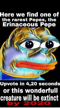 """<p>🅿e🅱e via /r/dank_meme <a href=""""http://ift.tt/2iOpROc"""">http://ift.tt/2iOpROc</a></p>: Here  we find one of  the rarest Pepes, th<e  Erinaceous Pepe  Upvote in 4,20 seconds  or this wonderfull  creature will be extinct  by  2020 <p>🅿e🅱e via /r/dank_meme <a href=""""http://ift.tt/2iOpROc"""">http://ift.tt/2iOpROc</a></p>"""