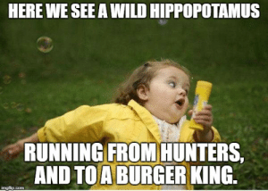 Burger King, Meme, and Girl: HERE WE SEE A WILD HIPPOPOTAMUS  RUNNING FROM HUNTERS.  AND TO A BURGER KING. Chubby Bubbles Girl Meme - Imgflip