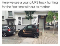 When he grows up, he'll deliver happiness to thousands of car guys ❤️ Car Throttle: Here we see a young UPS truck hunting  for the first time without its mother When he grows up, he'll deliver happiness to thousands of car guys ❤️ Car Throttle