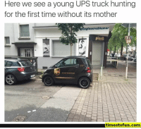 Anaconda, Funny, and Lol: Here we see a young UPS truck hunting  for the first time without its mother  ngineeredHumor  plenb  1145  timestofun.com funny memes 100 pictures - #funnymemes #funnypictures #humor #funnytexts #funnyquotes #funnyanimals #funny #lol #haha #memes #entertainment #timestofun.com