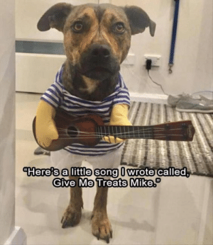 Dog Memes Of The Day 32 Pics – Ep35 #dogs #doglovers #lovelyanimalsworld - Lovely Animals World: Hereis alittle song l wrote called  Give Me Treats Mik Dog Memes Of The Day 32 Pics – Ep35 #dogs #doglovers #lovelyanimalsworld - Lovely Animals World