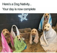 9 Christmas Memes That Gave Us a Good Laugh This Week: Here's a Dog Nativity  Your day is now complete  boredpanda.com 9 Christmas Memes That Gave Us a Good Laugh This Week