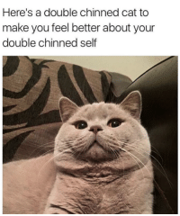 Haha..;): Here's a double chinned cat to  make you feel better about your  double chinned self Haha..;)