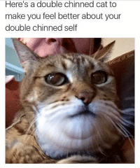 Ya big fat fatty: Here's a double chinned cat to  make you feel better about your  double chinned self  Bae Ya big fat fatty