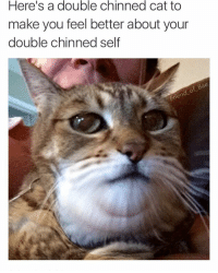 Cheer up ya big fat fatty :): Here's a double chinned cat to  make you feel better about your  double chinned  self  Bae Cheer up ya big fat fatty :)