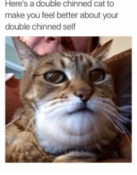 feel better meme: Here's a double chinned cat to  make you feel better about your  double chinned self