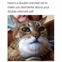 you're welcome: Here's a double chinned cat to  make you feel better about your  double chinned self  i Bae  Enen you're welcome