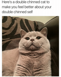 Double chin or just extra insulation for the cold months ahead? I can't decide: Here's a double chinned cat to  make you feel better about your  double chinned self Double chin or just extra insulation for the cold months ahead? I can't decide
