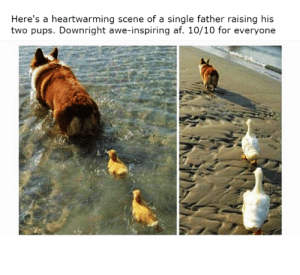 Af, Dad, and Wholesome: Here's a heartwarming scene of a single father raising his  two pups. Downright awe-inspiring af. 10/10 for everyone Wholesome Dad via /r/wholesomememes https://ift.tt/2oncyaL