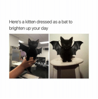 bad bihh: Here's a kitten dressed as a bat to  brighten up your day bad bihh