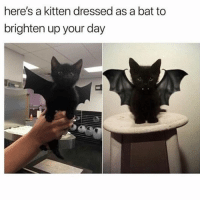 If you don't follow @batman you're missing out: here's a kitten dressed as a bat to  brighten up your day If you don't follow @batman you're missing out