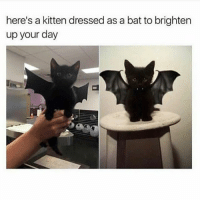 Follow me @antisocialtv @lola_the_ladypug @x__social_butterfly__x @x__antisocial_butterfly__x: here's a kitten dressed as a bat to brighten  up your day Follow me @antisocialtv @lola_the_ladypug @x__social_butterfly__x @x__antisocial_butterfly__x