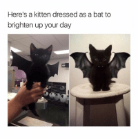 😎: Here's a kitten dressed as a bat to  brighten up your day 😎