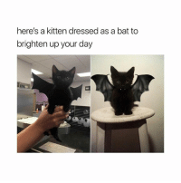 Happy October 😻 @teengirlclub @teengirlclub @teengirlclub: here's a kitten dressed as a bat to  brighten up your day Happy October 😻 @teengirlclub @teengirlclub @teengirlclub