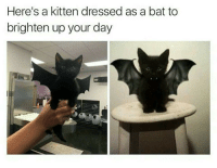 """<p>With Halloween right around the corner&hellip; via /r/wholesomememes <a href=""""http://ift.tt/2yJbLlw"""">http://ift.tt/2yJbLlw</a></p>: Here's a kitten dressed as a bat to  brighten up your day <p>With Halloween right around the corner&hellip; via /r/wholesomememes <a href=""""http://ift.tt/2yJbLlw"""">http://ift.tt/2yJbLlw</a></p>"""
