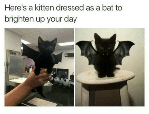 With Halloween right around the corner: Here's a kitten dressed as a bat to  brighten up your day With Halloween right around the corner