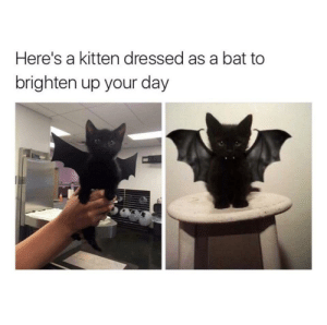 Adorable kitten now by PM_ME_TITS_4_DOG_PIC MORE MEMES: Here's a kitten dressed as a bat to  brighten up your day Adorable kitten now by PM_ME_TITS_4_DOG_PIC MORE MEMES
