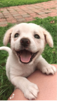 here's a picture of a puppy to brighten up ur day https://t.co/rSlnxKyl3N: here's a picture of a puppy to brighten up ur day https://t.co/rSlnxKyl3N