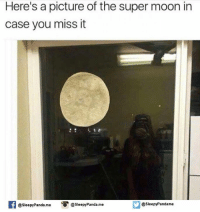 Memes, Panda, and Moon: Here's a picture of the super moon in  case you miss it  f @sleepy Panda me O @sleepy Panda.me  @sleepy Pandame