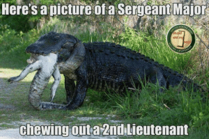 DV6: Here's a picture ofa Serucant Major  D STAT  EUTE  chewing outa 2nd Lieutenant DV6