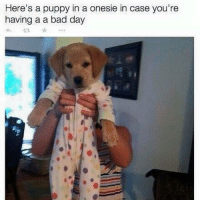 Bad Day, Puppies, and Puppy: Here's a puppy in a onesie in case you're  having a a bad day That helped a little