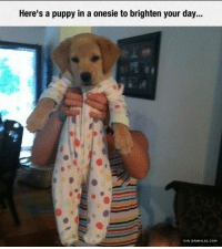 Memes, Http, and Puppy: Here's a puppy in a onesie to brighten your day... All New Level Of Cuteness http://www.damnlol.com/all-new-level-of-cuteness-112774.html