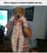 Beer, Dude, and Memes: Here's a puppy in a onesie to brighten your day... Dude Hold My Beer