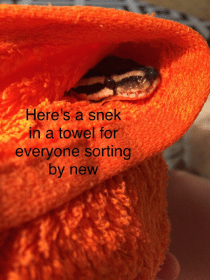 meirl: Here's a snek  in a towel for  everyone sorting  by new meirl